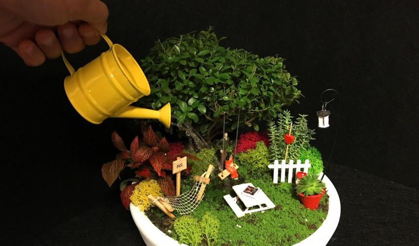 Minyatür Bahçe Için Bitki Seçimi Minyatür Bahçeler Ile En şık